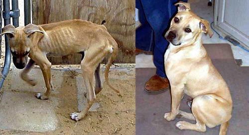 救助された犬や猫22