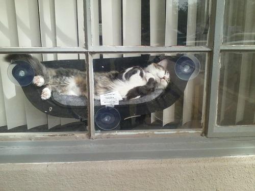 猫のハンモック01