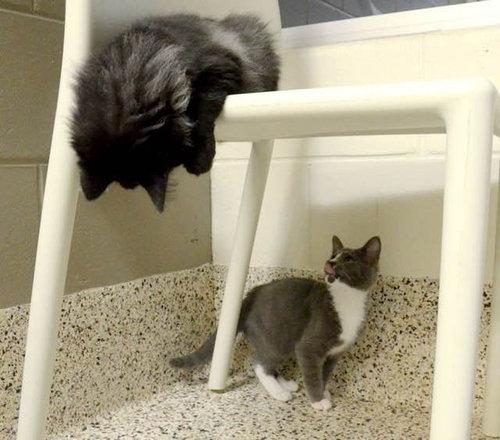 盲目の猫を黒猫が世話02