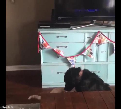 猫が犬に大胆な愛の告白06