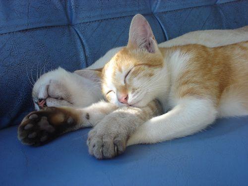 00スヤスヤぐっすり寝る動物たち