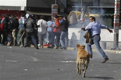 ギリシャの暴動犬12