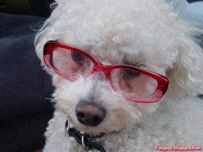 メガネ犬01