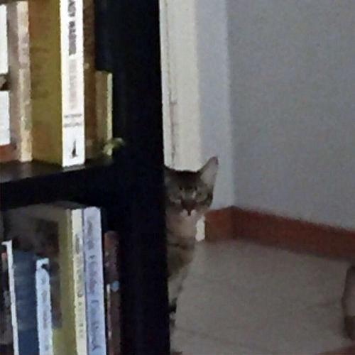姉の猫に見られてる02