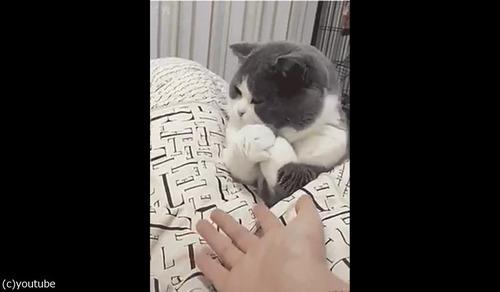 手を繋ぎたくない猫04
