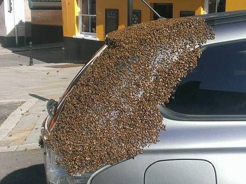 2万匹のハチに追われた車00