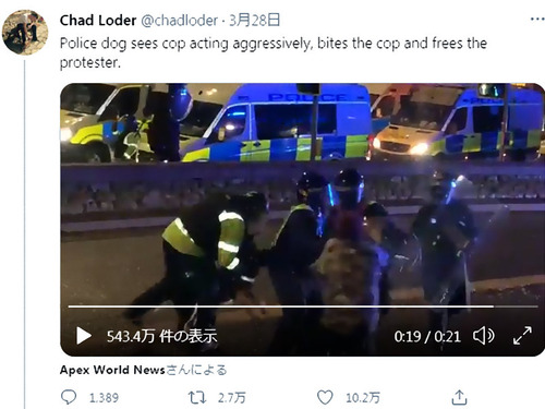 デモ抗議者を攻撃していた警官を噛んだ警察犬