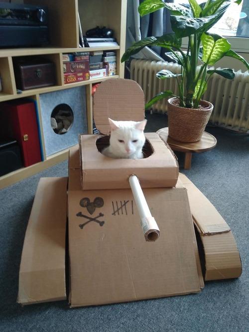 ダンボール猫戦車02