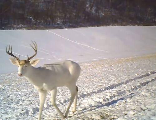 鹿が驚いた理由01