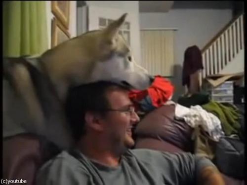 犬が頭の上に顔を乗せてくるとできる遊び02