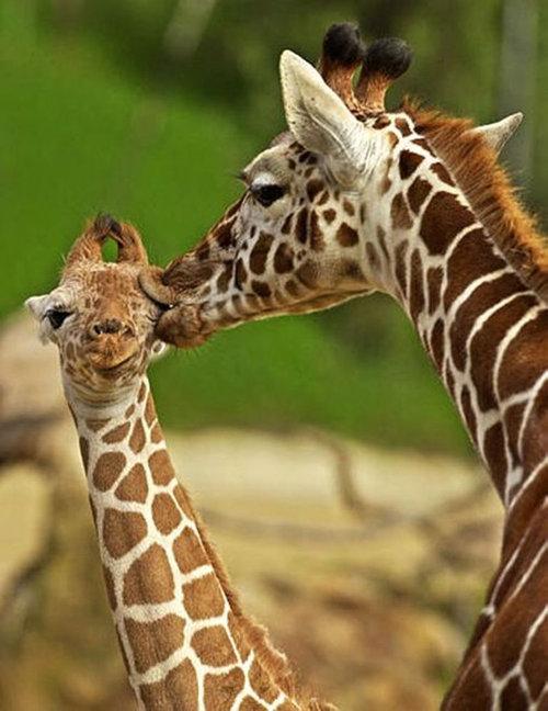 動物たちのキス09