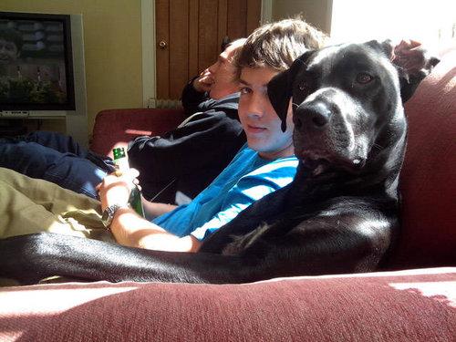 犬を飼うべき理由18