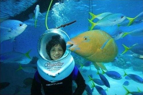 魚「ギャビン」01
