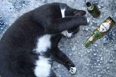 ハッピバースデーな猫16