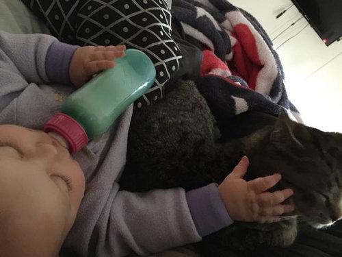 妊娠中に拾った猫が、今は赤ちゃんと親友に06