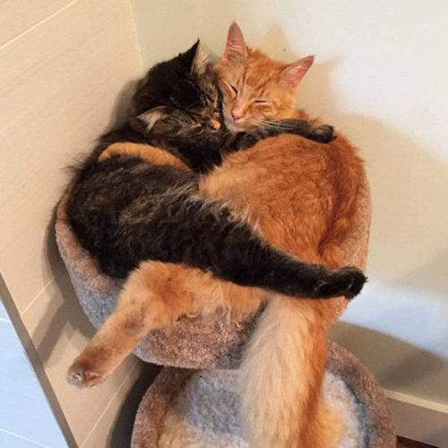 ベッドをシェアしていた子猫2匹06