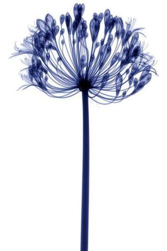花のレントゲン18