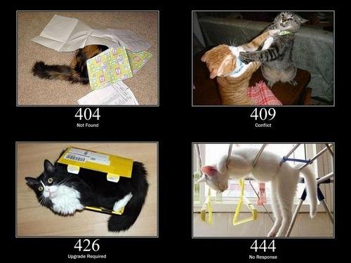 猫でHTTPステータスコード00