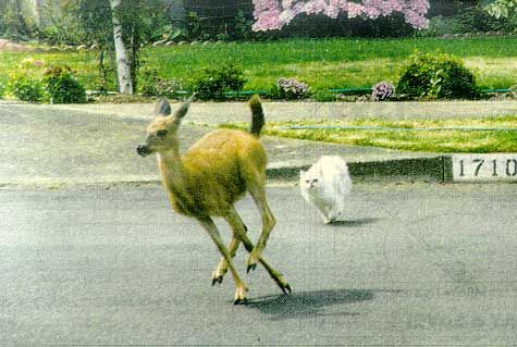 鹿と猫11