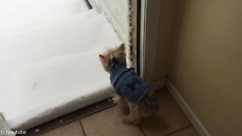 犬と初めての雪04
