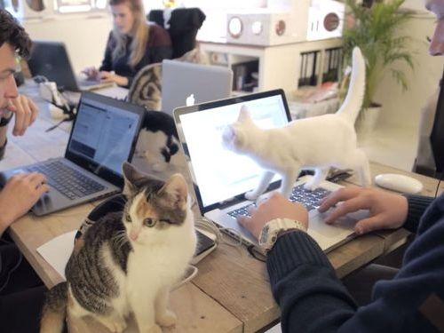 職場が猫だらけだったら01