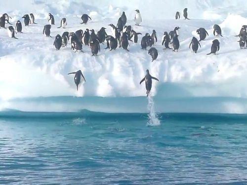 飛び出すペンギンたち