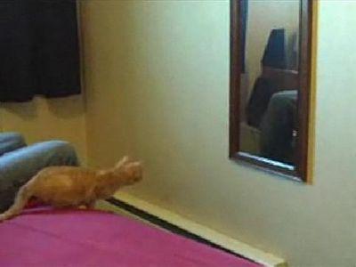 猫が鏡に激突