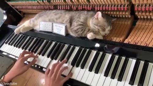 ご主人のそばに居たい猫…こんな場所でも昼寝02