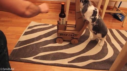 ビールを持ってきてくれるウサギ05