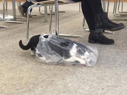 ドイツの大学で暮らす猫12