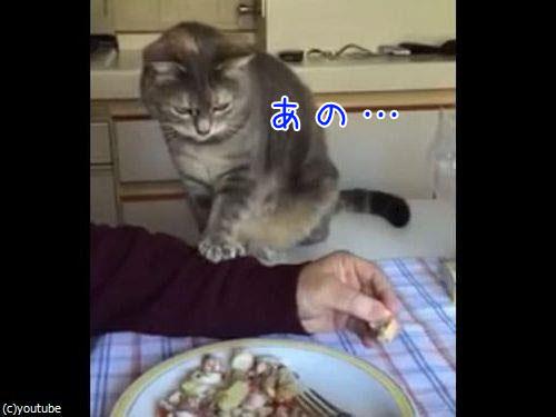 お行儀よくおねだりする猫00