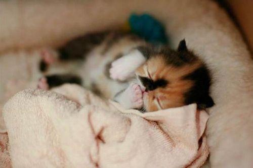 ぶさかわいい猫10