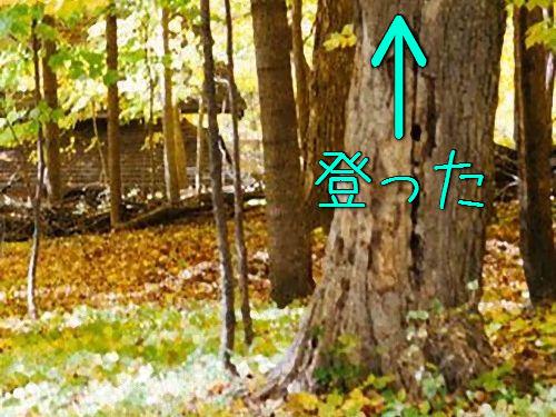 「カメラマンの自分が木に登り始めたとき」00