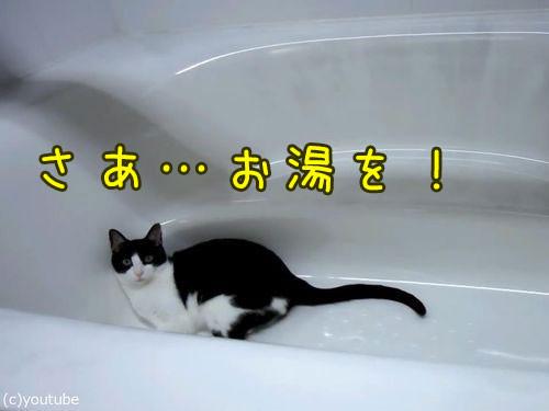お風呂が大好きな猫00
