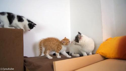子猫に優しいオス猫02