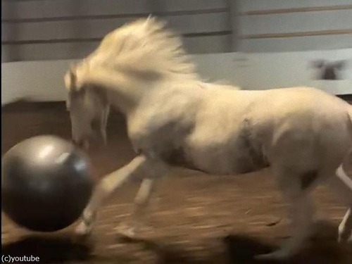 馬とエキササイズボール04