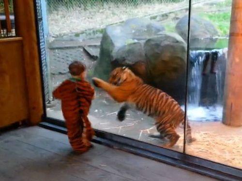 虎と人間の子供01