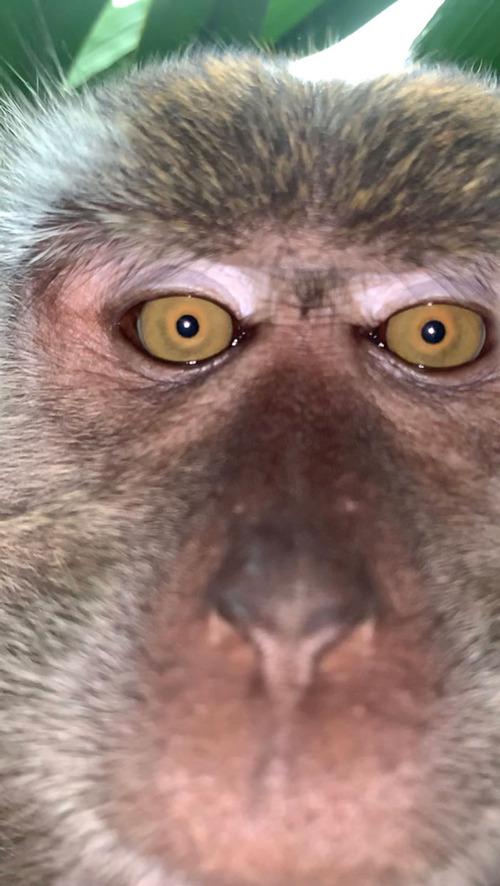 サルがスマホを盗んで自撮り02
