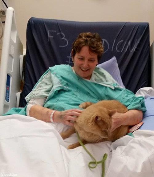 入院患者のペットを持ち込んでいい病院06