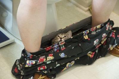 潜む猫06