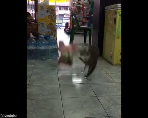 ぬいぐるみVS猫03
