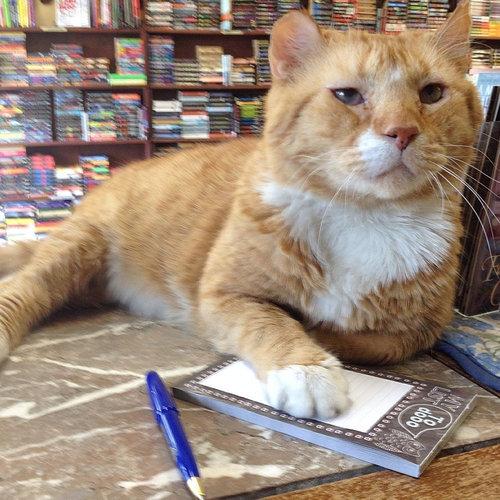 本屋の猫05