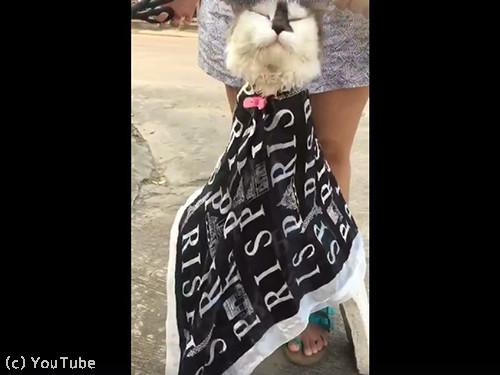 床屋ごっこに付き合う猫04