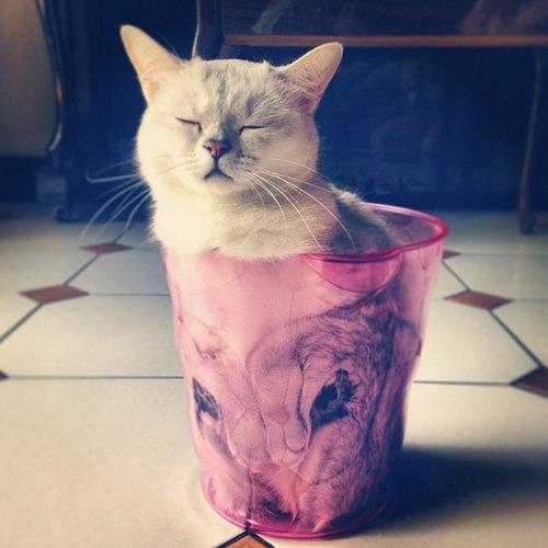 猫は液体説09