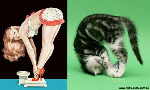 猫のポーズ05