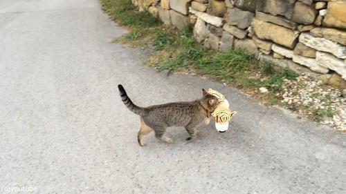 虎のぬいぐるみを盗む猫03