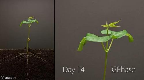 植物タイムラプス05