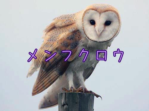 フクロウのカモフラージュ能力00