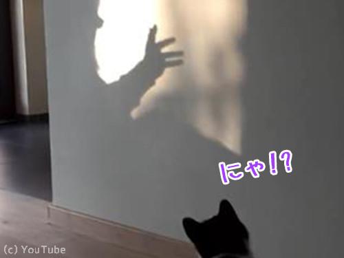 猫VS影絵00