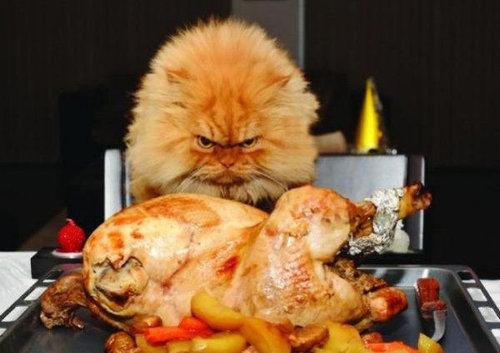 猫を飼った時の理想と現実15